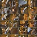 SlaveVideos – Stacy Burke in The Barn